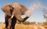 ルックバイス成長象