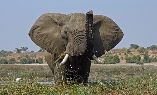 オールガイド象